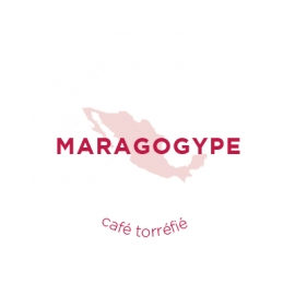 Café Mexicain - Maragogype - Café torréfié