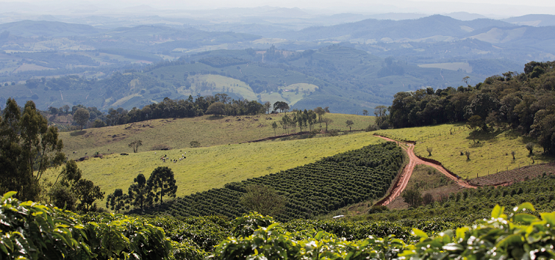 Plantation de café - Visuel 3